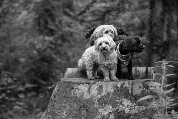 Hunde-Shooting-Rheinzabern-Juergen-Sedlmayr-05