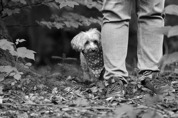 Hunde-FotoShooting-Rheinzabern-Der-Fotoraum-Juergen-Sedlmayr-13