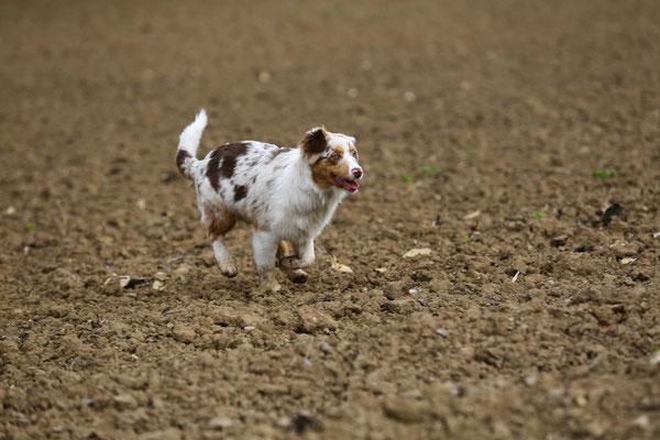 Fotoshooting-Tierfotografie-Juergen-Sedlmayr-HUND-22