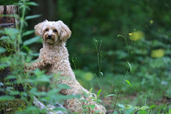 Hunde-FotoShooting-Rheinzabern-Der-Fotoraum-Juergen-Sedlmayr-09