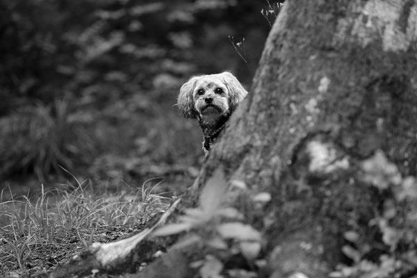 Hunde-Shooting-Rheinzabern-DER-FOTORAUM-01