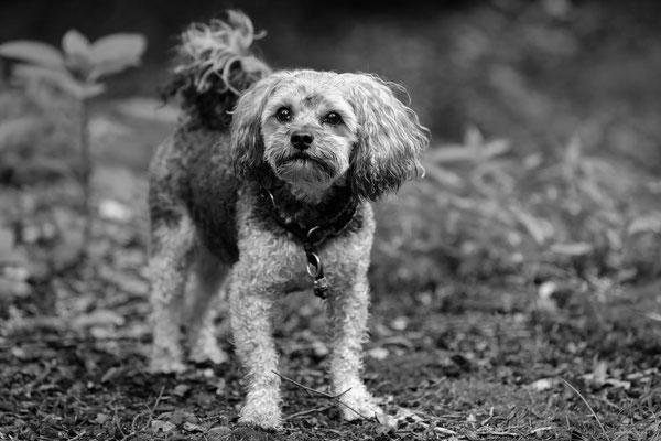 Hunde-Shooting-Rheinzabern-DER-FOTORAUM-09