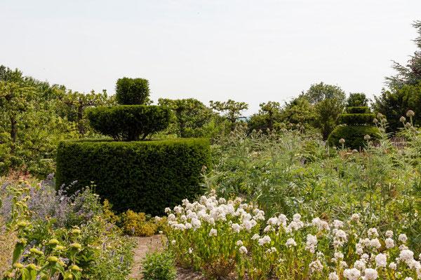 taxus , joliment taillé, jardin domaine Le Chatel, Beaulieu-en-Argonne