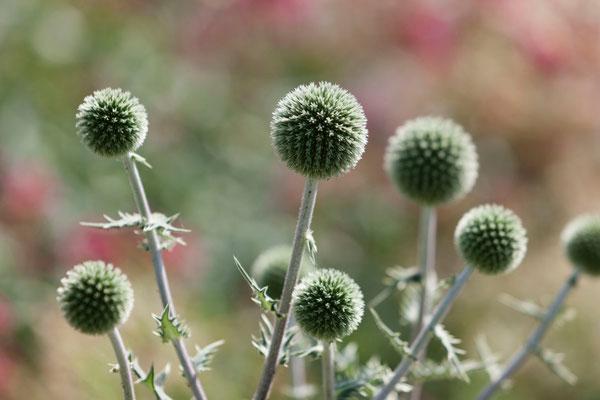 jardin à fleurs, gîtes Domaine Le Chatel, Meuse, Lorraine