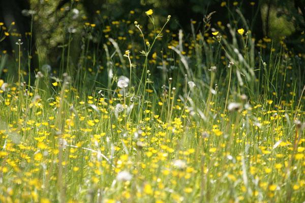 Heuschnupfen heilen, Allergien eneregtisch behandeln
