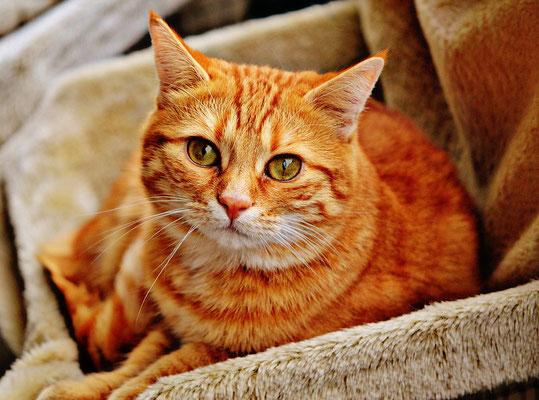 Tierbehandlung, Spirituelle Tierkommunikation, Energie für Tiere