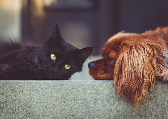 Tierkommunikation, Mediale Kontaktaufnahme mit dem Tier, alternative Tierheilung