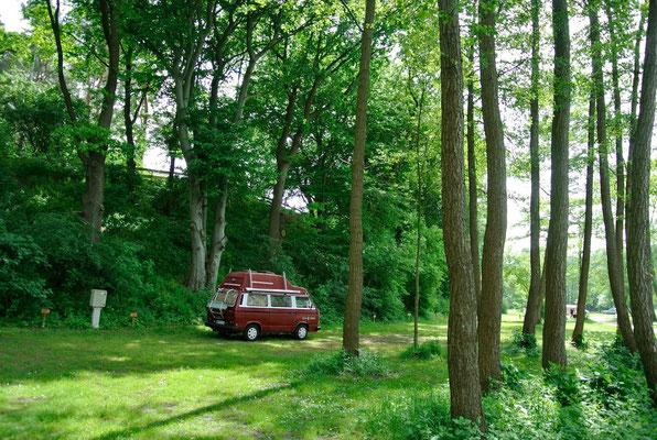 60er-Plätze am See unter hohen Bäumen © Naturcamping Zwei Seen am Plauer See/MV - www.zweiseen.de