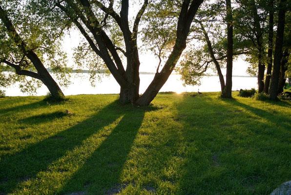 Breite Uferwiesen laden zum Baden & Sonnen ein und bieten perfekte Hängemattenbäume © Naturcamping Zwei Seen am Plauer See/MV . https://www.zweiseen.de
