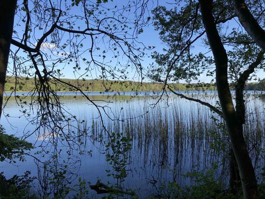 Pfad der Wald- und Baumgeister rund um den Großen Pätschsee © Stefanie Harnau, zweiseen.de