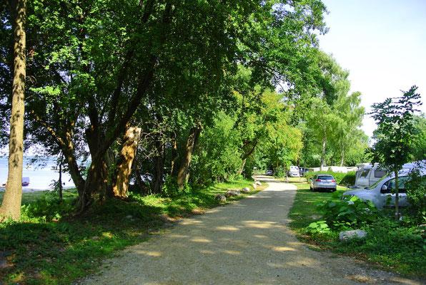 Die neuen M-Plätze M21-M39 direkt am Ufer mit Blick auf die Marina - ideal für Camper mit eigenem Boot © Naturcamping Zwei Seen am Plauer See/MV - www.zweiseen.de
