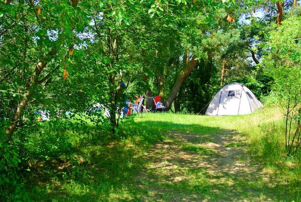 Idyll mit eigener Zufahrt: Platz 162 (vergleichbar sind 83-86, 189, 204, 205) © Naturcamping Zwei Seen am Plauer See/MV - www.zweiseen.de