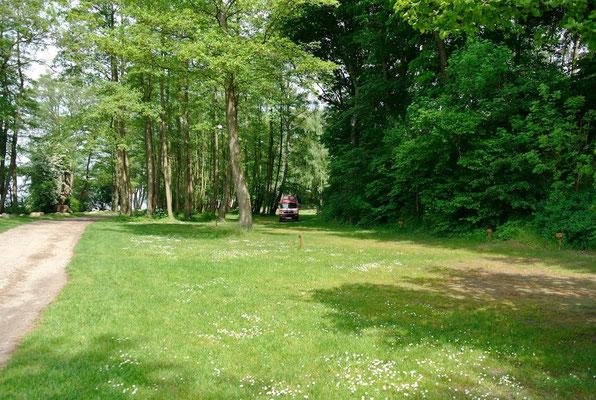 Blick auf 50er-Plätze am See unter hohen Bäumen © Naturcamping Zwei Seen am Plauer See/MV - www.zweiseen.de