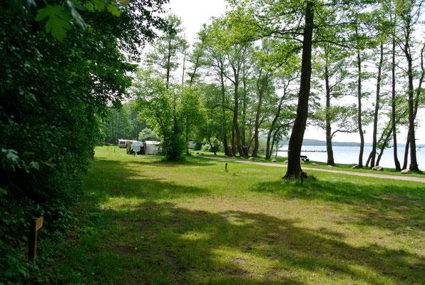 Blick auf 60er-Plätze © Naturcamping Zwei Seen am Plauer See/MV - www.zweiseen.de