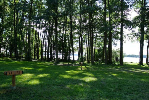 Schattige Plätze im 70er Bereich durch die hohen Bäume direkt am See © Naturcamping Zwei Seen am Plauer See/MV - www.zweiseen.de