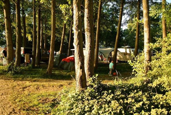70er-Plätze am See unter hohen Bäumen © Naturcamping Zwei Seen am Plauer See/MV - www.zweiseen.de