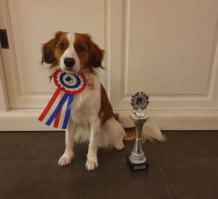 """Auch am 18.11.2018 wurde Rudis Tochter Elfi in Zutphen/ NL beim Clubmatch des niederländischen Kooikervereins : """"Bester Jugendhund"""""""