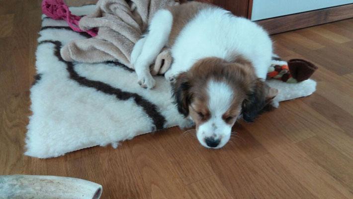 Aiko hat sein neues Zuhause bei Göppingen
