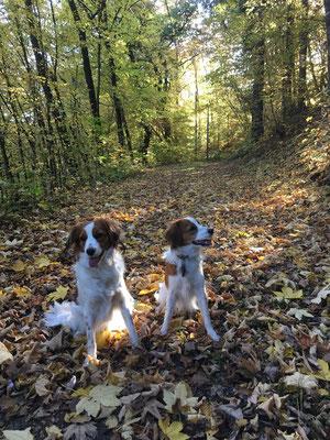 Unsere Kooiker passen so schön zum Herbstlaub:)