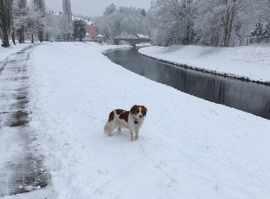 Nochmal Schnee