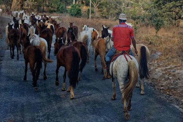 Tico mit seinen Pferden