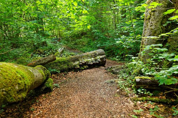 Ein kleiner Urwald bei Dietramszell
