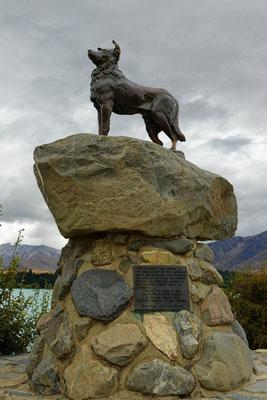 Denkmal des Hirtenhundes in Tekapo
