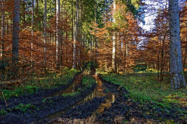 Ja, auch das ist unser Wald   :(