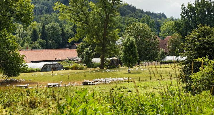 Kleinaltenburg mit seiner Gänsefarm