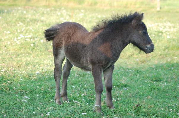 Daphne Des Sets, 1 mois