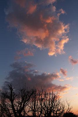 Vanilla Sky mit Mondsichel, 28.3.2020
