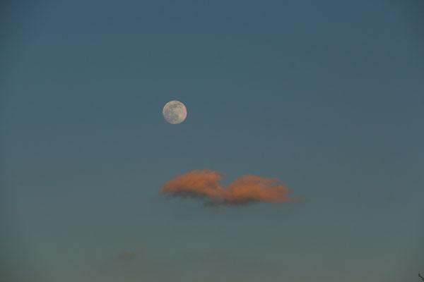 Frühlings-Mond, 8.3.2020