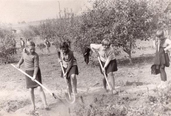 70-е годы. Школьный сад. Весенняя перекопка почвы