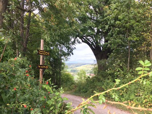 """Naturdenkmal """"Lindenbaum"""", ein etwa 500 Jahre alter Lindenbaum direkt am Premiumwanderweg P 21 Point India und Familienpfad Point India."""