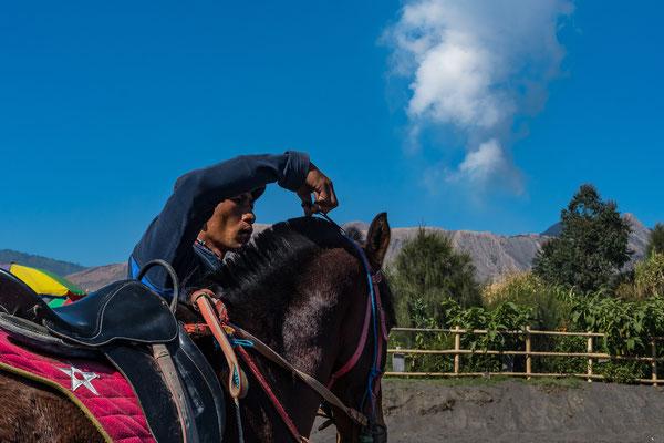 Liebevolle Pflege seines Pferdes.