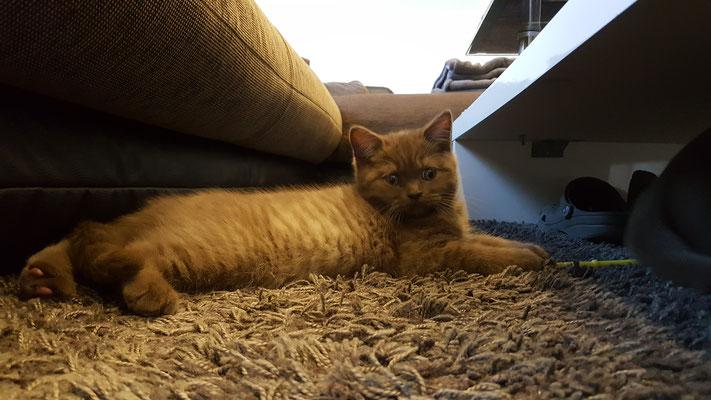 Katze relaxt
