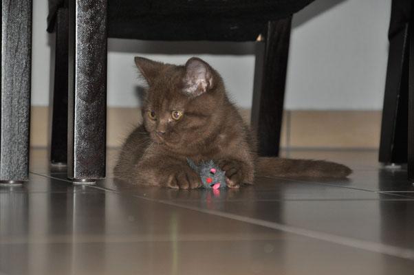 Katze Spielzeug