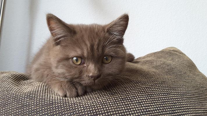 neue Katze
