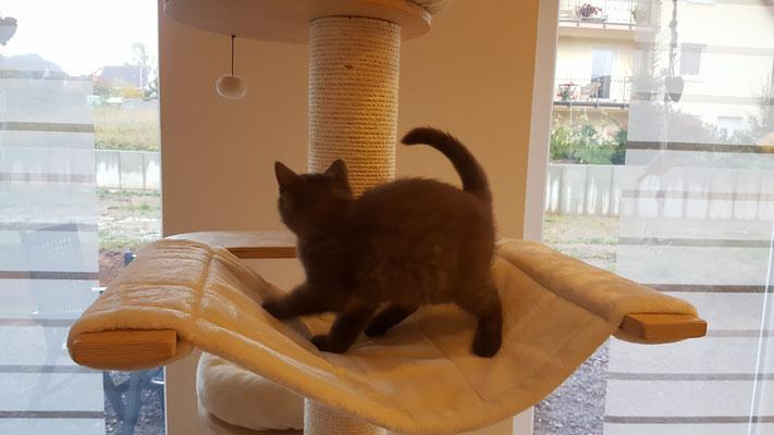 Katze Kratzbaum