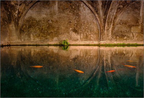 Siena: la vasca di Fontebranda - © Massimo Vespignani