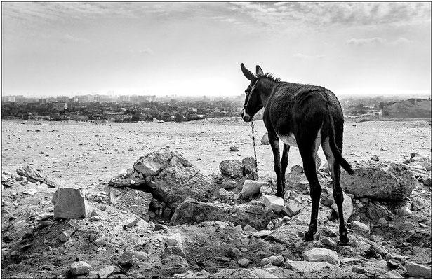 Piana di Giza - © Massimo Vespignani