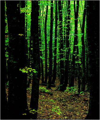 Foreste Casentinesi - © Massimo Vespignani
