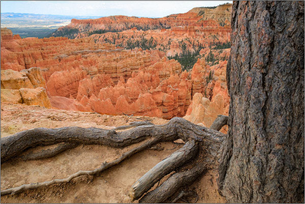 Bryce Canyon National Park (Utah) - © Massimo Vespignani