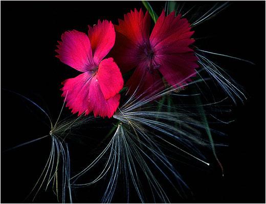 Fiori di campo - © Massimo Vespignani