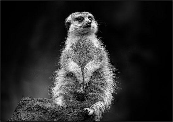 Seoul: zoo - © Massimo Vespignani