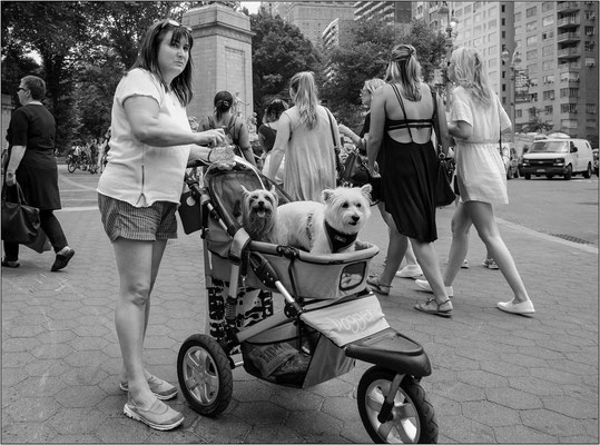 New York City: dog sitter all'ingresso di Central Park - © Massimo Vespignani