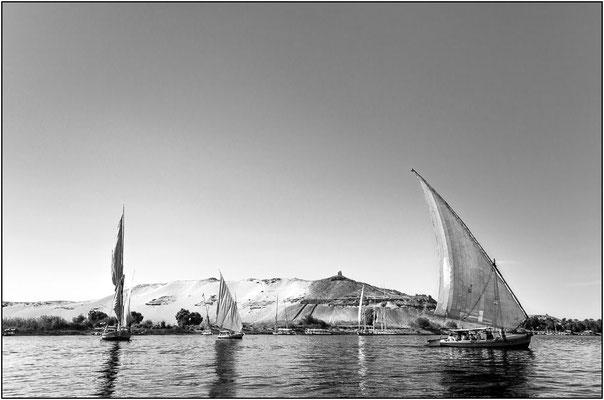 Feluche sul Nilo - © Massimo Vespignani