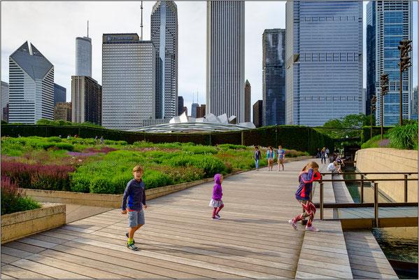 Chicago: il Lurie Garden del Millennium Park, coltivato con piante e fiori selvatici tipici delle praterie dell'Illinois  - © Massimo Vespignani