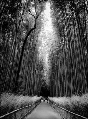 Foresta di bambù ad Arashiyama - © Massimo Vespignani