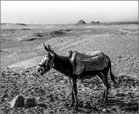 Piana di Saqqara - © Massimo Vespignani